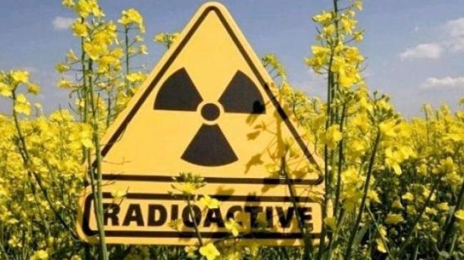 Як незаконно обробляються тисячі гектарів радіоактивно забруднених земель