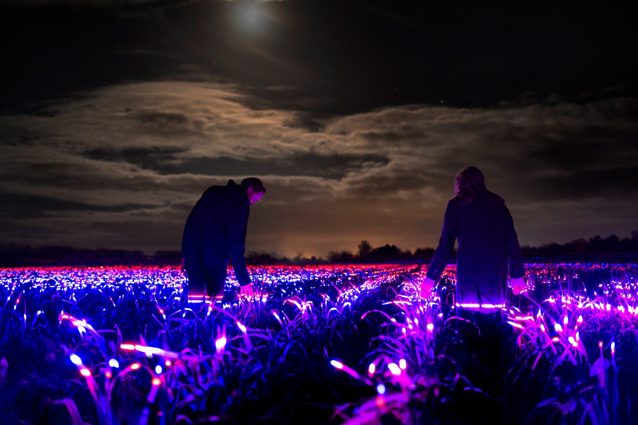 Магія світла на полях: нідерландський митець створив фантастичну інсталяцію