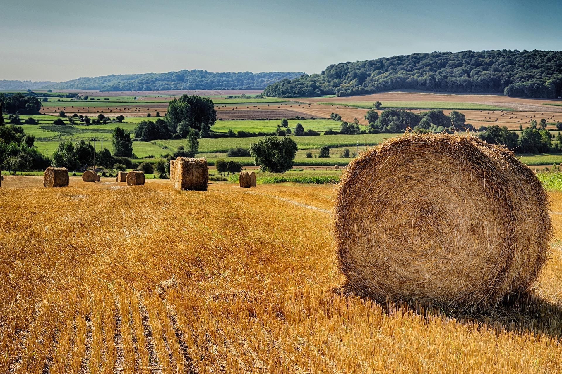 Фермер звинувачує голову ОТГ в земельному рейдерстві