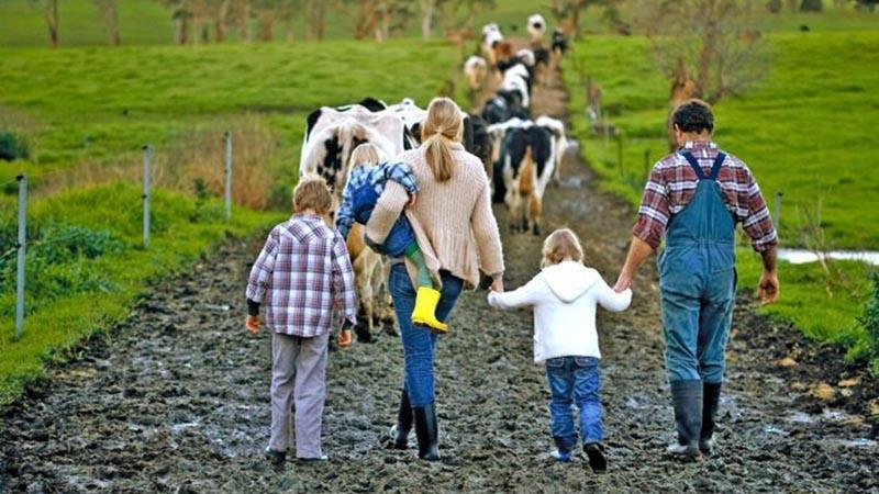 Сімейні фермерські господарства отримали від держави компенсацію ЄСВ