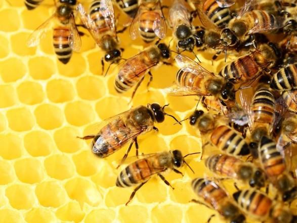 Агропідприємству арештують рахунки за загибель бджіл