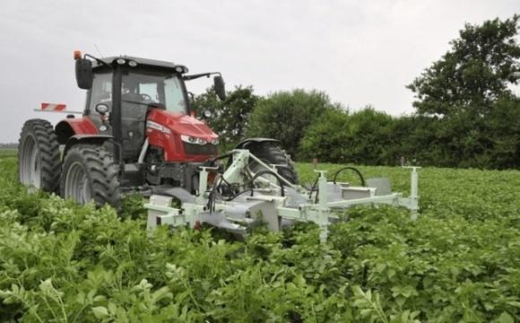 У Нідерландах придумали пристрій, який відловлює колорадських жуків