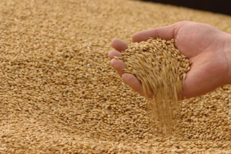 В Україні закупівельні ціни на пшеницю зростають всупереч світовим