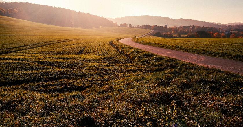 На Полтавщині селяни судяться з фермером за паї