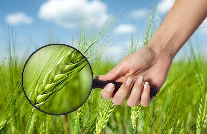 "Аудит ""Аграрного фонду"" виявив фінансових порушень на 2,17 млрд грн"