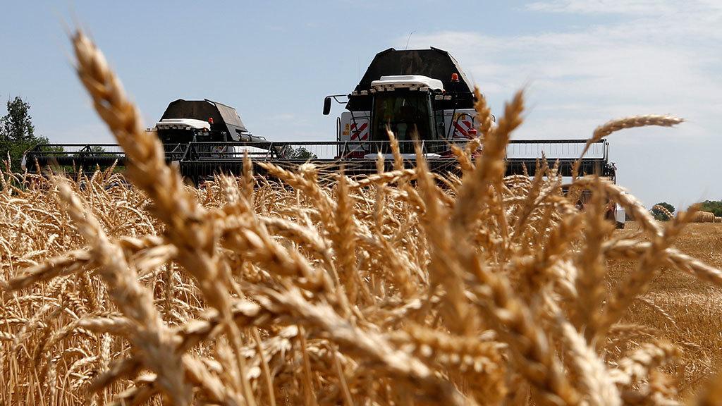 Урожай у коморі, але не в бюджеті. Чому влада боїться розкуркулити найбільших агробаронів?