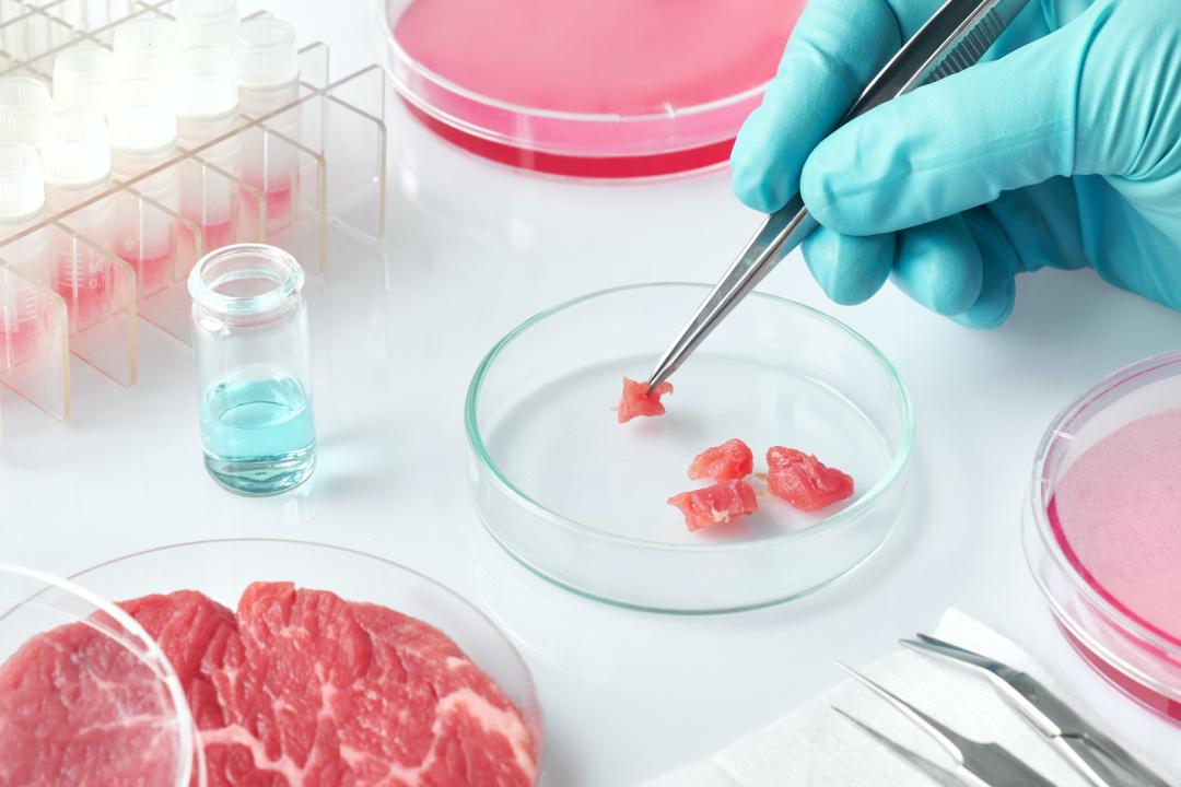 На вирощуванні лабораторного м'яса можна заробити майже $3 млрд