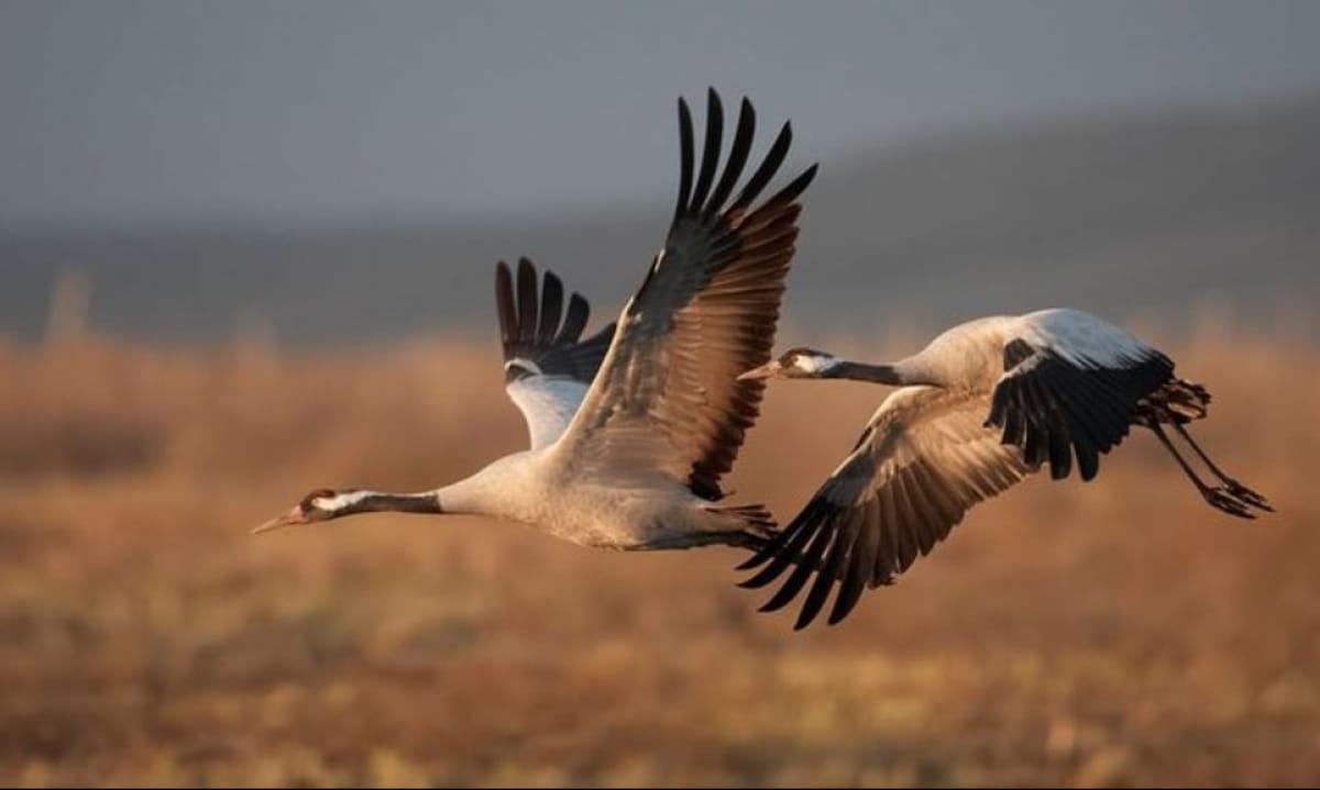 Держпродспоживслужба ініціює створення зони екологічної безпеки довкола заповідника «Асканія-Нова»