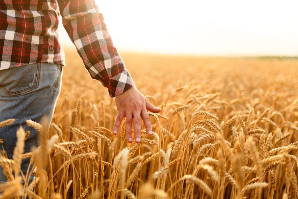 Зеленський підписав закон про стимулювання діяльності фермерських господарств